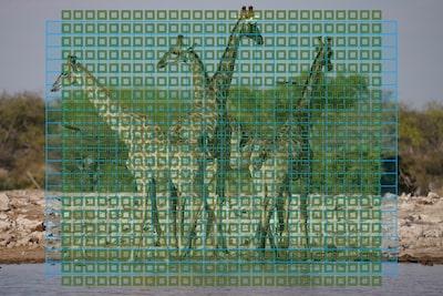 Imagine prezentând regiunile senzorului de focalizare automată care acoperă aproape întregul cadru