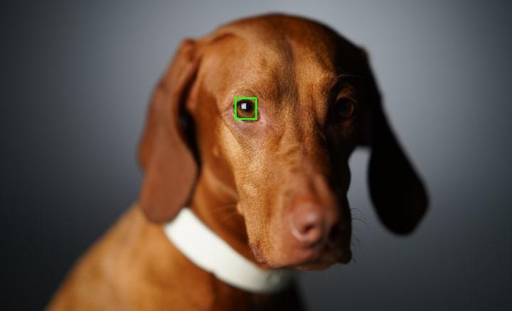 Imagine cu fața unui câine cu un cadru de focalizare automată suprapus peste un ochi