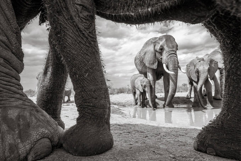 Will Burrard-Lucas - Un fotograf pasionat de fauna ...