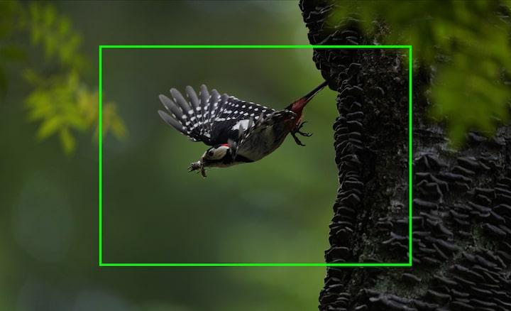 Portret cu o pasăre în zbor, ilustrând rezoluția înaltă a imaginii, care permite decuparea pentru a mări imaginile capturate