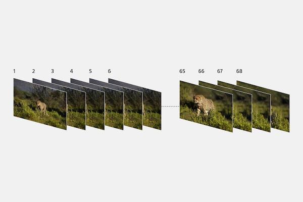 Ilustrație arătând mai multe imagini cu animale sălbatice, realizate succesiv