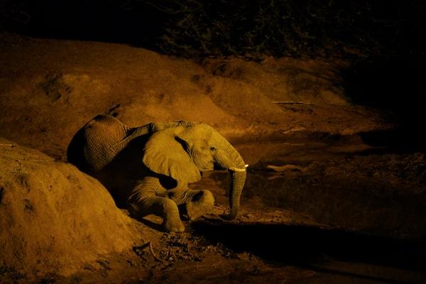 Imagine cu un elefant într-un cadru slab luminat